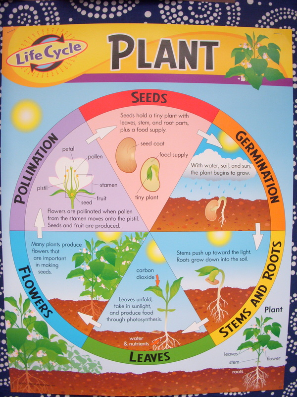 Worksheets and Resources 2nd Grade Plants – 2nd Grade Science Worksheets